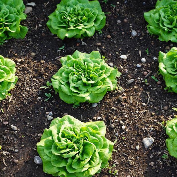 Menu «Pour continuer en légèreté, en compagnie d'une salade verte»