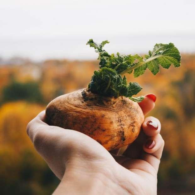 En octobre, les légumes racines sont au menu !