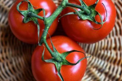 La tomate : reine de l'été