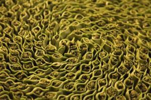 raviolis aux épinards rôtis