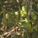 emission huile olive - visuel presentation - copie